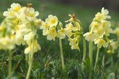 Frühlingszeit beträgt Blumenzeit stockfotos