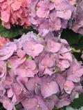Frühlingszeit-Blumengarten Stockbilder