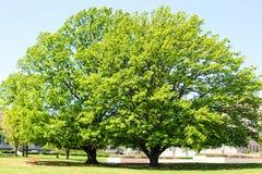 Frühlingszeit in Canberra, Australien Lizenzfreie Stockfotografie