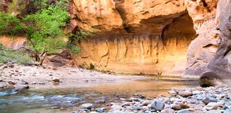 Frühlingszeit in den Engen bei Zion National Park stockfotografie