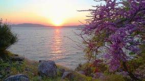 Frühlingszeit mit Sonnenuntergang nahe hisaronu Bereich in Marmaris stock footage