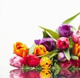 Frühlingszeit… Rosenblätter, natürlicher Hintergrund Stockfotografie