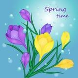 Frühlingszeitblume Lizenzfreies Stockbild