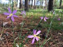 Frühlingszeitblumen Lizenzfreie Stockbilder