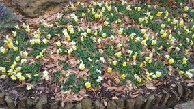 Frühlingszeitblumen Stockfoto