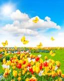 Frühlingszeitlandschaft mit Schmetterlingen und sonnigem blauem Himmel Stockbild