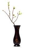 Frühlingszweig mit Jungeblättern im Vase stockbilder