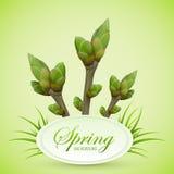 Frühlingszweige auf grünem Hintergrund Lizenzfreie Stockfotos