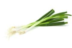 Frühlingszwiebeln auf weißem Hintergrund Stockfotografie