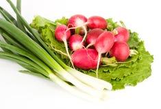 Frühlingszwiebeln und -rettiche auf Kopfsalat Lizenzfreie Stockfotografie