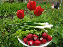 Frühlingszwiebeln und roter Rettich Stockfoto