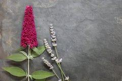 Frühsommerblumen mit Buddleia und Lavendel lizenzfreie stockfotos
