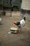 Frühstück auf dem Bauernhof stockfoto