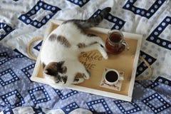 Frühstück im Bett Krug und ein Tasse Kaffee auf einem hölzernen Behälter handgemacht Weiße Katze auf blauem Leinen Stockfotografie