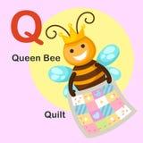 För alfabetbokstav för illustration djurt Q-täcke, drottningbi Arkivfoton