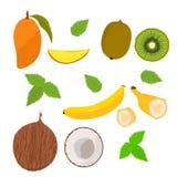 Fr?chte mangopflaume Kokos Banan Kivi Garden Vektor stock abbildung
