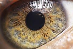 för eos-öga för kamera 20d skytte för makro mänskligt Fotografering för Bildbyråer