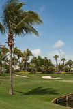 för florida för 4 kurs green golf Royaltyfria Foton