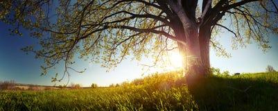 för formatillustratör för 8 extra eps tree för oak Arkivfoto