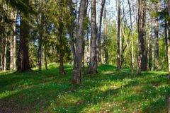 Fr?hling in einem Wald lizenzfreie stockfotografie