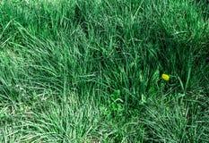 Fr?hlingsgras mit Blumen lizenzfreie stockfotografie