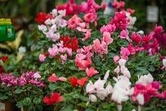 Fr?hlingsstimmung in einem Blumenladen stockfoto