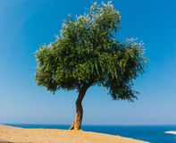för kindtandnatt för el madrid tree för plats olive Arkivbilder