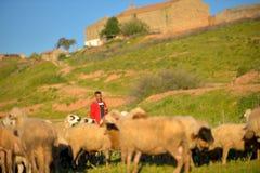 Frôle le troupeau de moutons Photographie stock libre de droits