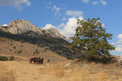 Frôlez les chevaux photo libre de droits