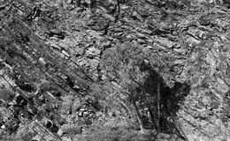 FR Sandstone wall tree BW. Black white image of ancient geological sandstone formation. Vertical rock with lonely live gumtree at the bottom of stone creek in Stock Photography