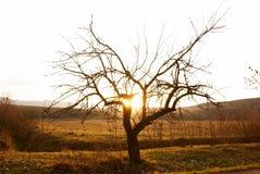 för solnedgångtid för öken enkel tree Arkivbild