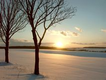 för solnedgångtrees för fält snöig vinter Arkivbild