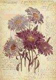 För tappningstil för blommor botanisk konst för vägg med texturerad bakgrund Royaltyfria Foton