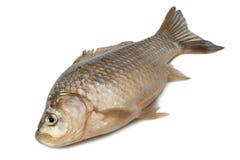 Fraîchement carpe de Crucian de poisson d'eau douce Photos stock
