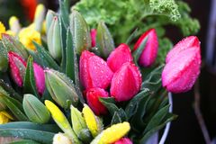Fraîchement fleurs de ressort de coupe prêtes pour la vente photo libre de droits