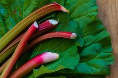 Fraîchement la rhubarbe de jardin de coupe sur la rhubarbe endommagée par lingot part sur un fond en bois Fermez-vous, copiez l'e Photographie stock