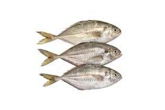 Fraîchement poissons sur le blanc Photo libre de droits