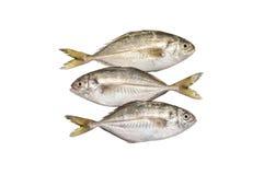 Fraîchement poissons sur le blanc Photos libres de droits