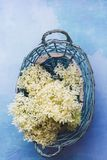 A fraîchement sélectionné des fleurs de sureau dans le panier photo libre de droits
