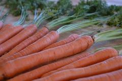 A fraîchement sélectionné les carottes organiques avec des dessus de carotte photographie stock