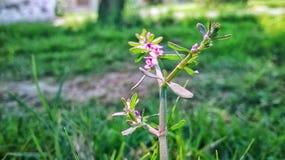 Fraîcheur de beauté de créativité de nature hearttouching Photo stock