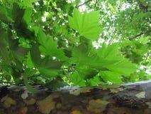 Fraîcheur en bois Image stock
