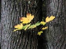 Fra gli alberi Fotografia Stock