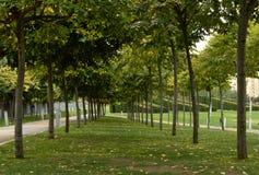 Fra gli alberi Fotografie Stock Libere da Diritti