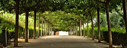 Fra gli alberi Immagini Stock