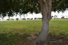 Fra gli alberi Immagini Stock Libere da Diritti