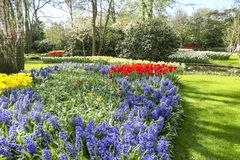 Fra gli alberi e gli arbusti sono parecchi letti di fiore con i tulipani gialli e rossi, i giacinti porpora ed i narcisi bianchi immagini stock libere da diritti