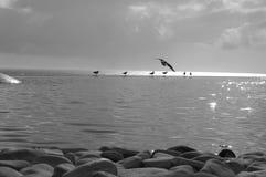 Fra il cielo e l'acqua Fotografia Stock