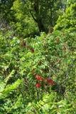 Fra il prato e la foresta Fotografia Stock Libera da Diritti