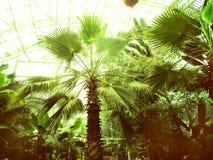 Fra le palme Paradiso verde Fotografia Stock Libera da Diritti
